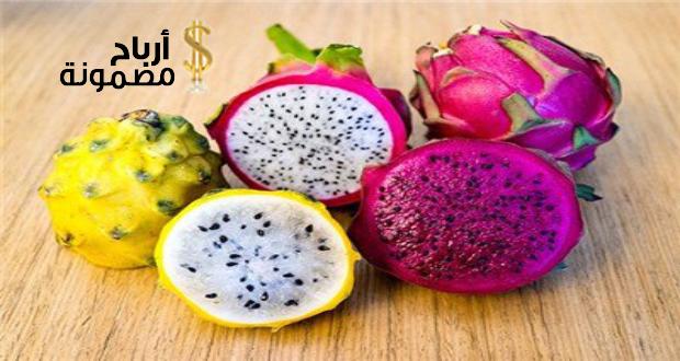 Photo of دراسة جدوى زراعة فاكهة التنين وطرق زراعته