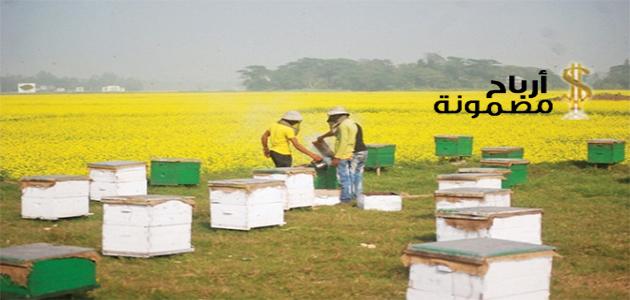 الربح من تربية النحل
