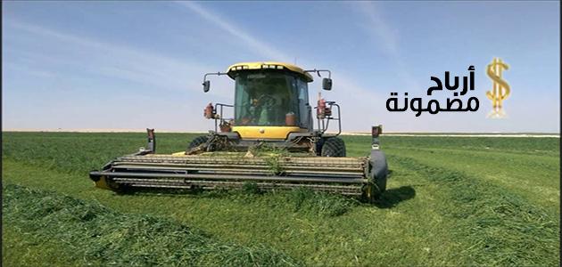 مشروع زراعة البرسيم الحجازى